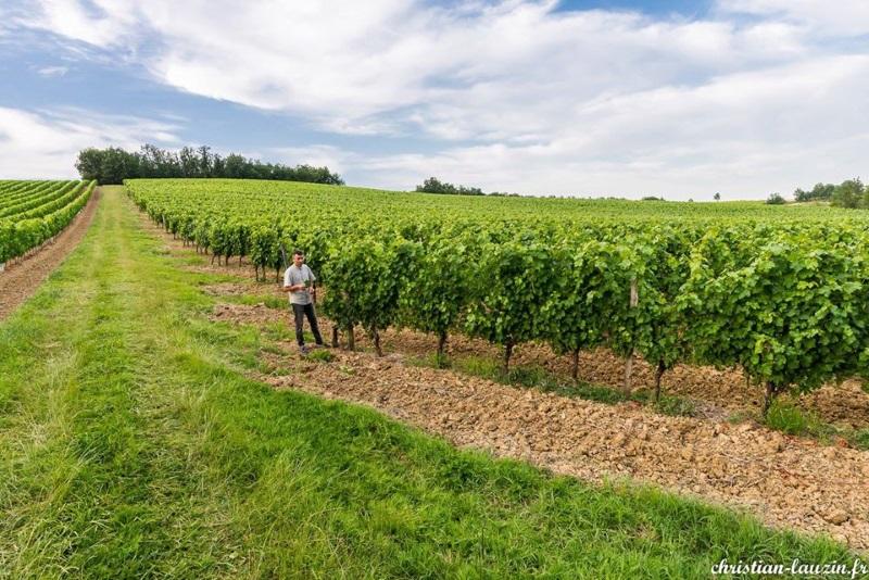 Jean-Claude Lartigue dans ses vignes AOC Coteaux du Quercy