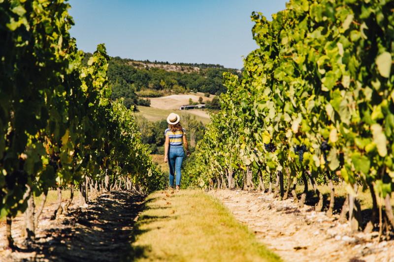 découverte des vignes avec l'oenotourisme en aoc coteaux du quercy
